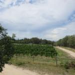 Rhino Vineyard